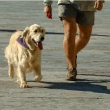 Les Français sont-ils de bons maîtres pour leurs chiens ? Des progrès à faire !