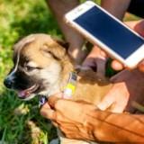 En 2020, les animaux de compagnie belges seront liés au numéro de registre national de leurs propriétaires !