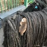 Elle débarque chez le vétérinaire : quand la secrétaire voit son chien, elle tombe de sa chaise !