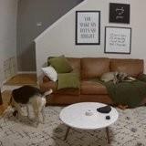 Il demande à son chien de l'aider pour la lessive, la réaction du toutou est une surprise totale !
