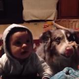 Quand un chien apprend à parler avant un bébé (Vidéo du jour)