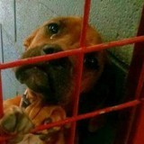 Au refuge, ils voient un chien en train de pleurer et prennent une photo qui va changer sa vie
