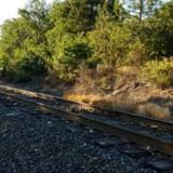 Il voit un chien sur les rails de chemin de fer, s'approche et un petit détail le rend malade