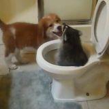 Un chien et un raton-laveur jouent dans un endroit très insolite (Vidéo du jour)