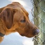 5 choses à savoir sur l'adoption d'un chien en refuge