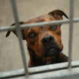 A Madrid, l'euthanasie des animaux abandonnés est désormais interdite