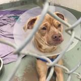 Le volontaire s'approche d'un chien du refuge et a les larmes aux yeux en découvrant son histoire