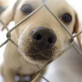 Covid-19 : les refuges de la SPA débordent, mais le nombre d'abandons d'animaux reste stable