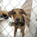 Coronavirus : la SPA craint les euthanasies en masse à cause du confinement