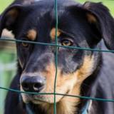 Il emmène un chien dans un refuge et précise qu'il veut l'adopter, le toutou est euthanasié