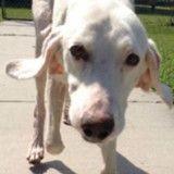 Ce chien est retourné 11 fois au refuge, quand les employés comprennent pourquoi ils sont bouleversés