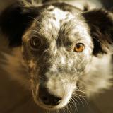 Le regard entre le chien et son humain, un véritable créateur de liens