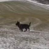Ce chien a un ami pas comme les autres, et c'est adorable (Vidéo du jour)