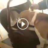 Ce chien rencontre sa nouvelle petite sœur, sa réaction est PARFAITE (Vidéo du jour)