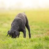 20 chiens empoisonnés à la mort aux rats en Savoie