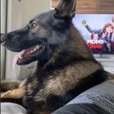 Il fait sa liste de courses, mais il dit quelque chose devant son chien qu'il n'aurait jamais dû dire (vidéo)