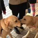 Elle voit deux chiens se jeter l'un sur l'autre, regarde leurs oreilles et comprend l'incroyable vérité (Vidéo)