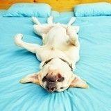 A quoi les chiens rêvent-ils?