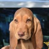 Des policiers dévoilent le nom de leur nouveau chien : un énorme scandale éclate !