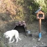 Depuis 18 mois, ce chien reste au même endroit sur le bord de la route. La raison est bouleversante
