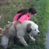 Un chien géant est allongé près de la route et refuse de bouger, une famille passe et découvre la triste vérité