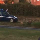 Des policiers tirent sur un chien perdu en Isère, la vidéo postée sur Facebook choque