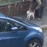 Elle regarde par la fenêtre et voit un homme avec son chien : ce qu'il fait la met dans tous ses états