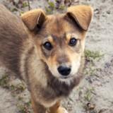 Ce chien attend sa maîtresse décédée depuis plus de 80 jours, la vidéo fait pleurer le monde entier