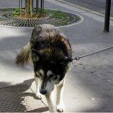 Faites de votre chien la star d'un clip sur la propreté en ville !