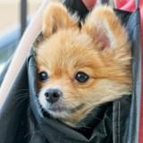 Elle reçoit une amende de 90 euros à cause de son chien, la raison est plus que discutable !