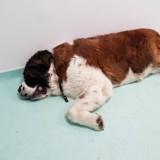 Elle emmène sa chienne chez le vétérinaire, il fait une radio et comprend que tout le monde avait tout faux