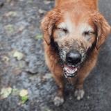 5 choses dégoûtantes que font nos chiens… mais qui sont normales !