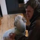 Ce sans-abri pensait son chien perdu pour toujours, mais le destin en a décidé autrement (Vidéo)