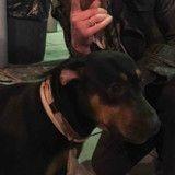 Ce que cette femme a fait pour le chien de ce sans-abri va vraiment vous émouvoir