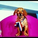 Secret Story ou l'histoire secrète d'un chien star nommé Saucisse