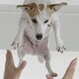 Mon chien me saute dessus, que faire ?