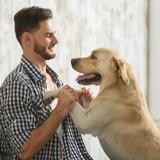 Pourquoi les chiens sautent de joie sur leur humain ?