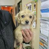Ce chien devait être euthanasié pour une raison très triste qui a brisé le coeur de tout le monde