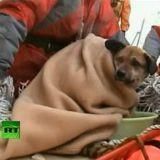 Japon : un chien sauvé 3 semaines après le tsunami (Vidéo)