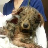 Il sauve un chien de l'euthanasie, sa photo donne les larmes aux yeux à des milliers de personnes
