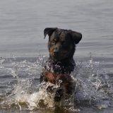 Un homme meurt noyé en tentant de sauver un chien