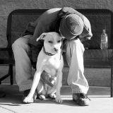 Etre SDF avec un chien