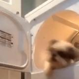 Elle met son chien dans le sèche-linge, mais ce n'est pas le pire !