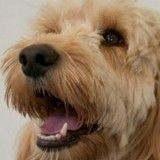 Un chien héroïque sauve la vie d'un enfant trisomique coincé dans un sèche-linge