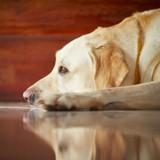 Le blues de la rentrée chez le chien : comment lui (ré)apprendre à rester seul