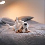 Ce chien a trouvé le plus improbable des endroits pour faire sa sieste