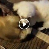 Adorable ! Ce singe et ce chien partagent un moment de jeu (Vidéo du jour)