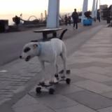 Le chien pour qui tout roule ! (Vidéo du jour)