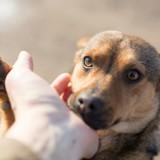 Ces chiens peuvent vous soigner : découvrez leurs super-pouvoirs !