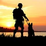 """""""39-45, les animaux dans la guerre"""" : diffusion inédite sur France 3 le 8 mai"""